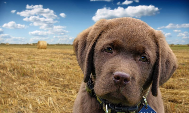 puppy-large-photo