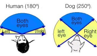 canine-vision-2